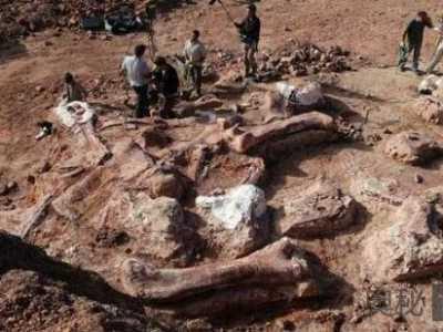 阿根廷出土史上最大恐龙化石 最大的恐龙化石