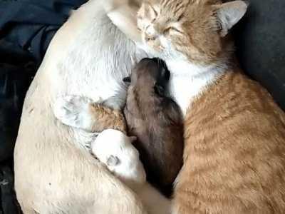 猫咪和狗狗都杂交出宝宝了 狗会和猫交配吗