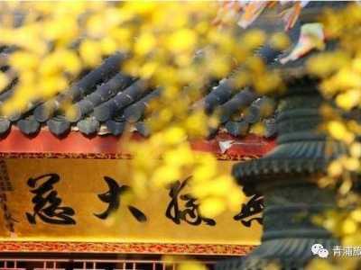 上海有哪些地方在悄悄变美 枫树红银杏黄