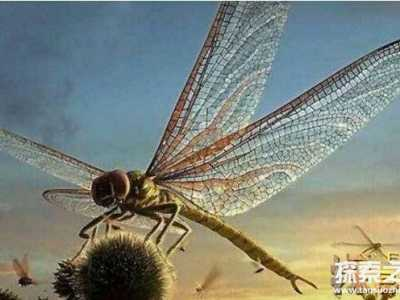 已知史上最大昆虫最长达2.4米 巨脉蜻蜓