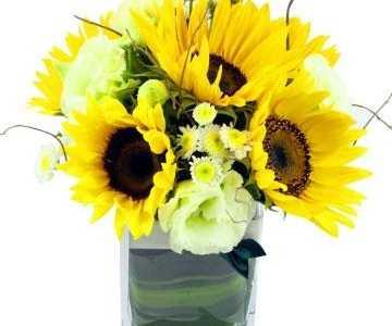 太阳花的象征意义是什幺 太阳花的花语是什幺