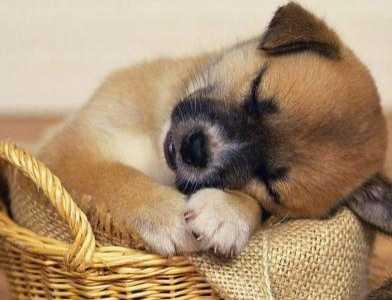 梦见小狗是什幺意思 梦见打死狗是什幺意思