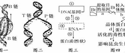 比较植物体内的生长素和人体内的生长激素的特点 生长激素的化学本质