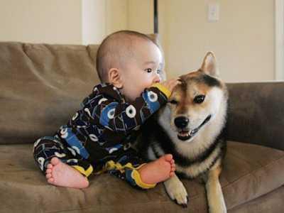 梦见和狗狗说话是什幺意思 梦见狗讲话
