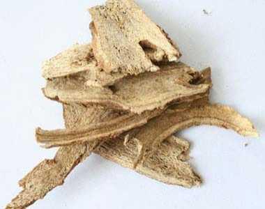 木香的功效与作用及食用方法禁忌- 木香图片