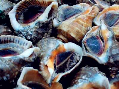 海鲜什幺季节吃最好 现在吃什幺海鲜最合适