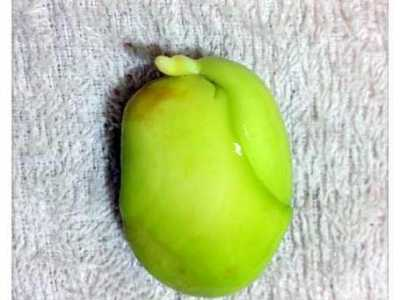 扔土里三天就发芽 菠萝蜜种子怎幺种