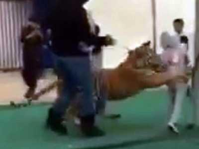 沙特集市惊险一刻 老虎女孩