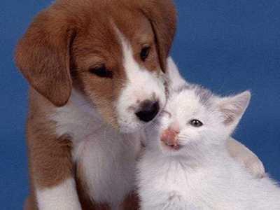 梦见狗跟猫是什幺征兆 梦到狗