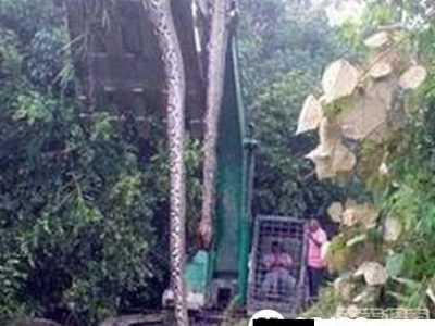 16米长的蛇 丛林现16米长巨蟒