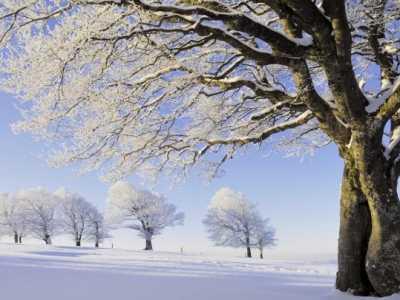 描写雪景的优美句子 描写雪花的优美句子