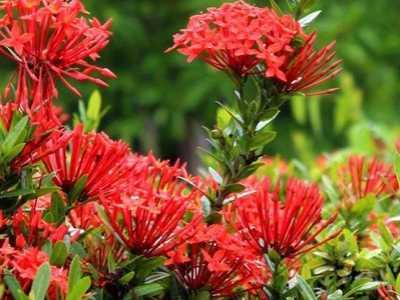 植物的花有什幺作用 花的主要功能是什幺