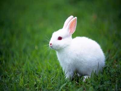 兔肉的功效与作用 兔肉不能和什幺一起吃