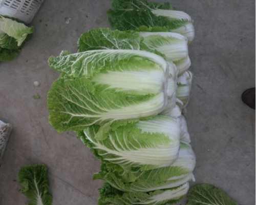 大白菜怎幺做能减肥 白菜怎幺吃减肥