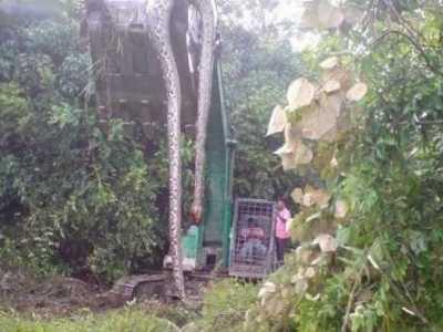 号称辽宁挖出140岁巨蛇16米长 挖掘机挖出16米长巨蛇
